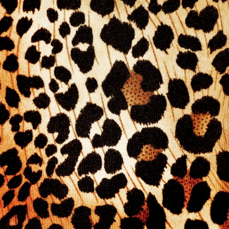 Cheetah pattern photo
