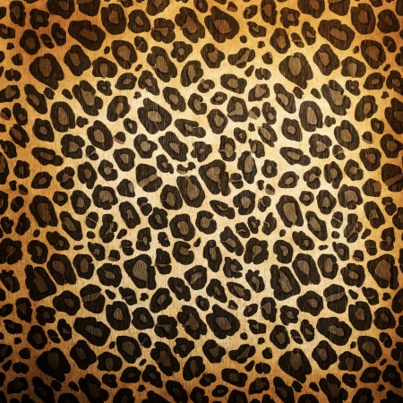 leopard: Leopard pattern background or texture close up Stock Photo