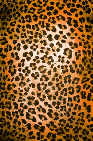 Wild animal pattern background or texture close up Stock Photo - 22220219