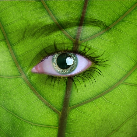 Nature concept - woman face covered with green leaf texture photo