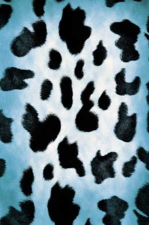 Natural cow pattern spots  background or texture photo