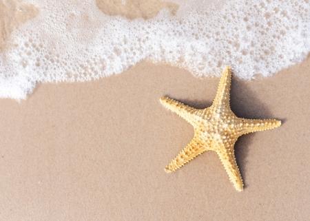 Seestern am Strand Sand. Platz für Ihren Text auf Sand