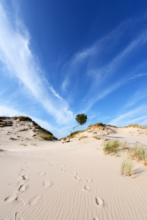 hassock: Desert landscape Slowinski National Park Poland Baltic sea Stock Photo