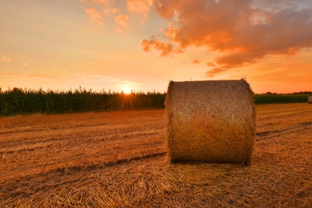 Hay bales on the field after harvest, Poland photo