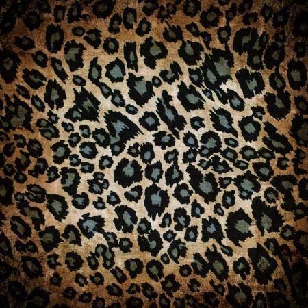 leopard print: Wild animal skin pattern - leopard or cheetah