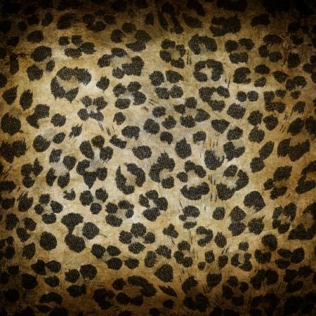 gepard: Wild animal skin pattern - leopard or cheetah