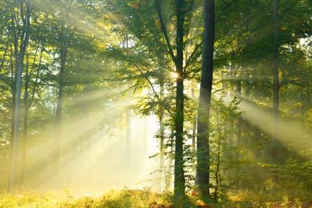 Herbst Morgendämmerung im Wald Standard-Bild