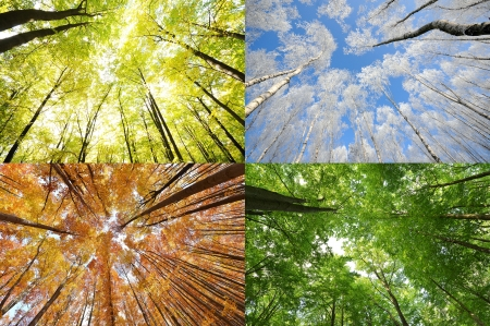 changing color: Four seasons in the forest Stock Photo
