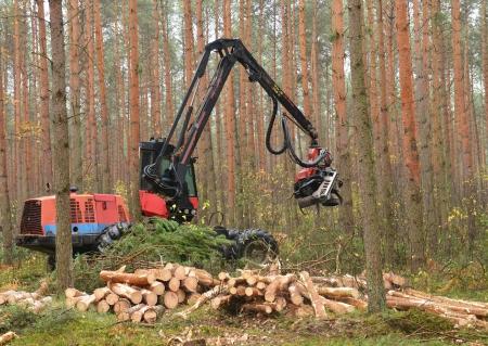 Forestales pesados ??árboles picar cosechadoras