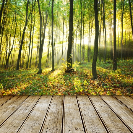 Empty wooden deck table with autumn forest background. Ready for product display montage. Standard-Bild