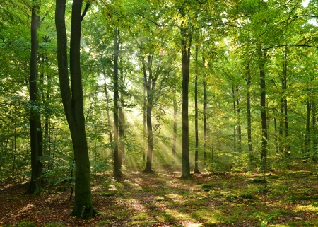 Autumn dawn in magic forest Stock Photo