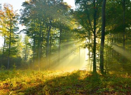 Piękna jesień rano w lesie