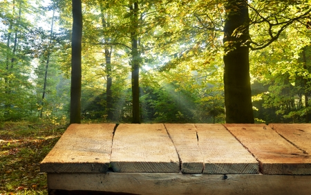 empty wooden table and forest in background. Great for product display montages. photo