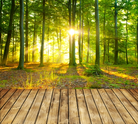 Empty wooden table and green forest in background