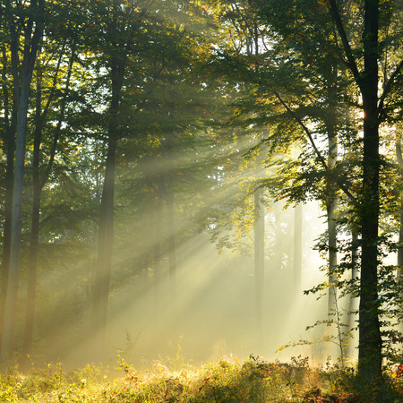 forest trail: Beautidul sunbeams in green forest Stock Photo