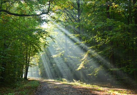 Beautidul sunbeams in green forest Stockfoto