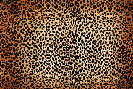 leopard cat: wild animal pattern background or texture close up - material
