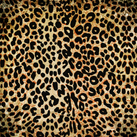 leopard skin: wild animal pattern background or texture close up - material