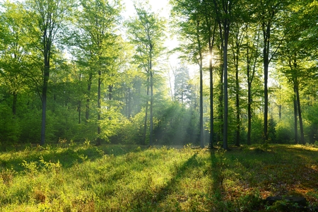 Beautiful morning in the forest - Poland photo
