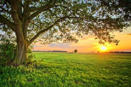 eenzame boom en zonsondergang in Polen