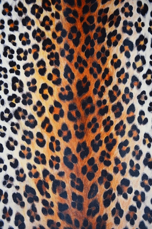 chetah: Wild animal skin pattern