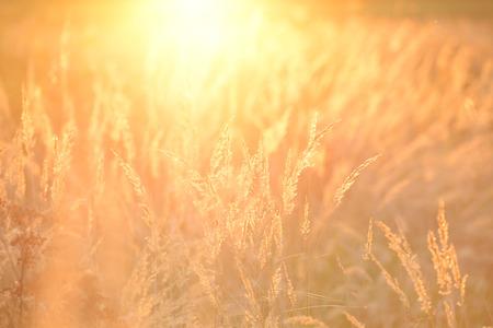 Sommer-Hintergrund Standard-Bild - 33042240