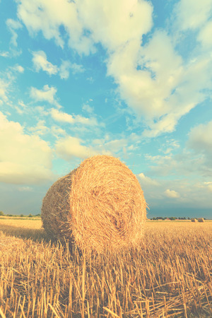 hayroll: Hay bales on the field after harvest, Poland