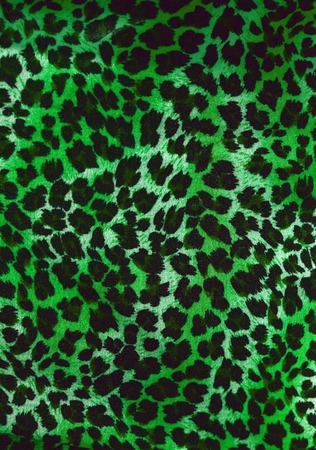 gepard: Wild animal skin pattern
