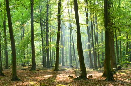 Por la mañana en el bosque