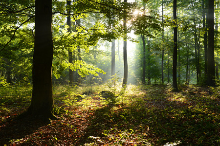 Morning in the forest Stockfoto