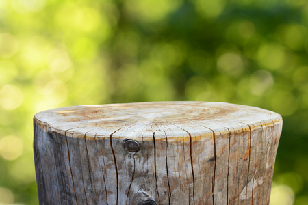 Empty tree trunk for display montags