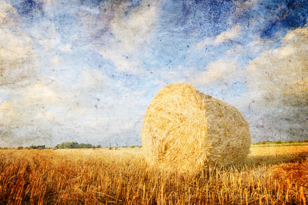 hay field: Hay bales on the field after harvest, Poland- vintage version Stock Photo