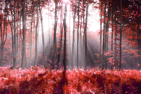 abstraction: Red forest abstraction