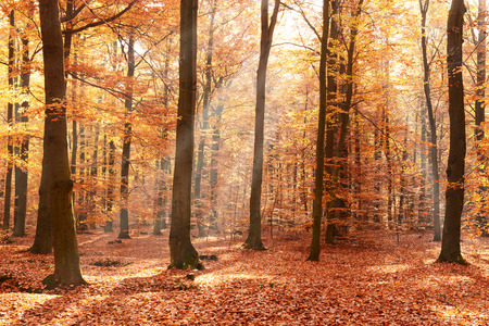 Foresta d'autunno Archivio Fotografico - 67287957