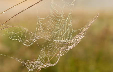 Druppeltjes op spinnenweb