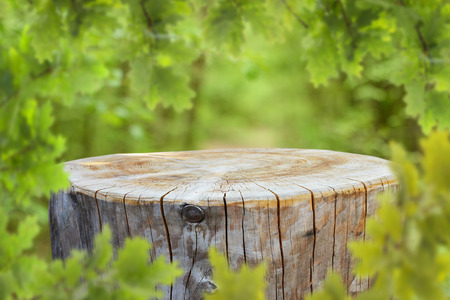 Empty tree trunk for display montages Stock Photo