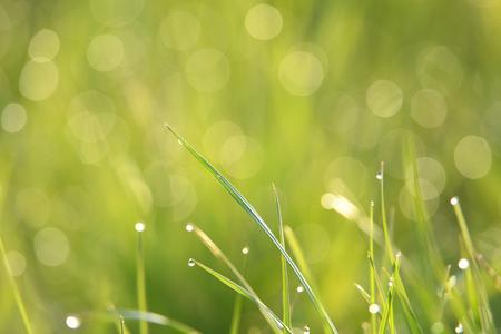 ourdoor: Green background Stock Photo