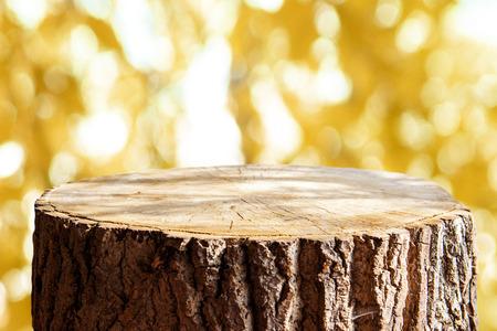 Lege boomstam voor weergave montags Stockfoto