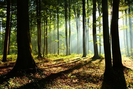 Forest landscape Imagens