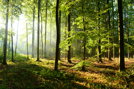 Morning in the forest Imagens
