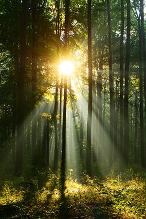 Mañana en el bosque Foto de archivo - 87983271