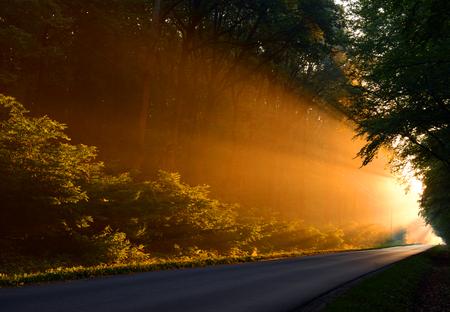 Beautiful morning Reklamní fotografie - 89826448