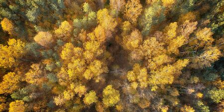 Drone shot - autumn trees canopies