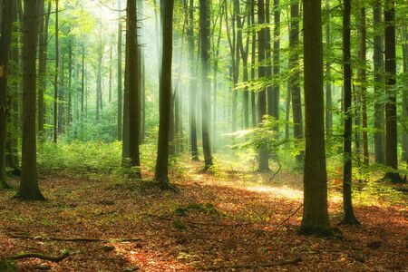 Bella mattinata nella foresta Archivio Fotografico