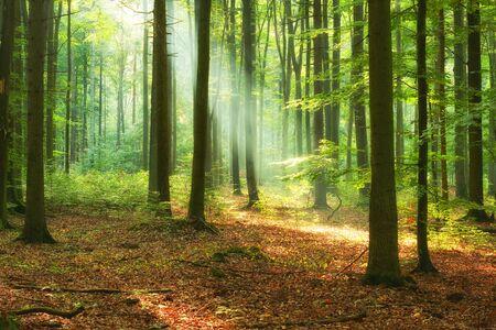 Schönen Morgen im Wald Standard-Bild