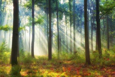 Bella mattinata nella foresta