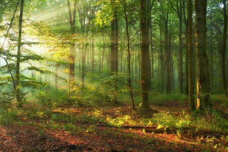 Herfstochtend in het oude bos Stockfoto