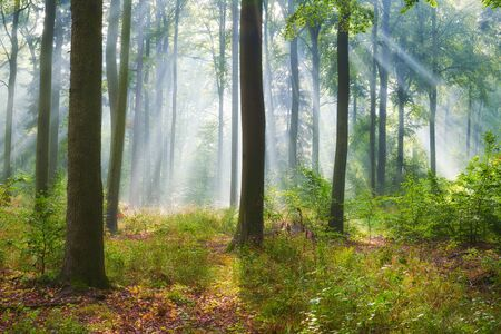 Autumn morning in old forest