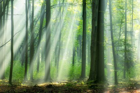 Beautiful morning in the forest Stockfoto
