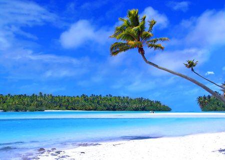Palm Tree on One Foot Island Stock Photo